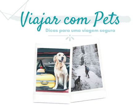 Viajar com cães: dicas para um viagem segura com seu pet