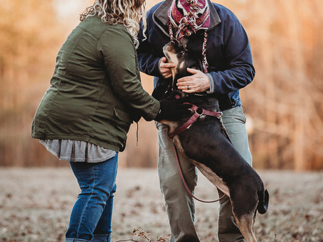 Thuis Studios | Just Because~A Pup + Her Humans | Annapolis, Maryland Photographer + Videographer