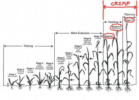 Crimping Small Grains Diagram.jpg