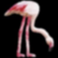 Фламинго 2