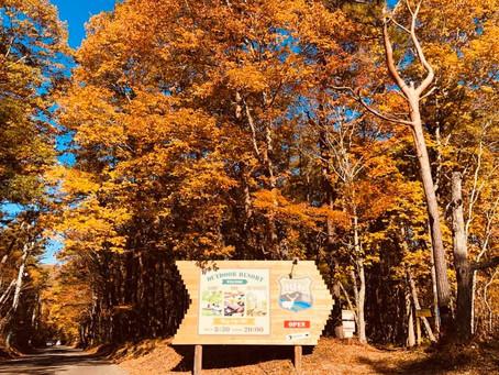 最高の紅葉キャンプ日和!
