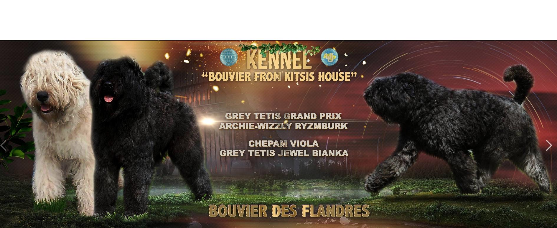 Bouvier Puppies Bouvier Kennel Bouvier Puppy For Sale