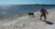 Dog Friendly Vacations Florida on Beach.