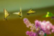 mariposas.jpeg