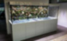 Aquarienbau Tausz Aquarienprofi Tausz Aquarienbau Sonderbau Filter Beleuchtung Abdeckung Unterschrank Sonderbau Sondergröße Aquarium Silikon Weißglas Floatglas Zoo Center Tausz Riffline Freshline Meerwasser Süßwasser Redsea Reefer Horst Tausz Rene Tausz Hessenberger Sondermass Sondermaß Aquarium Unterschrank Aquarium nach mass