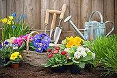 Pflanzenverkauf 1.jpg