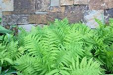 Ferns, stone, landscape design