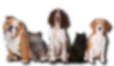 mascotas.png