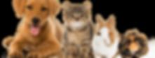 pets_big-845x321.png