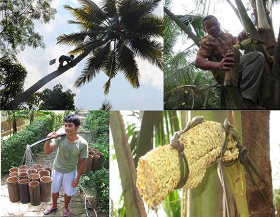 ココナッツオイル1.jpg