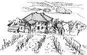 vineyard illustrations 3.jpg