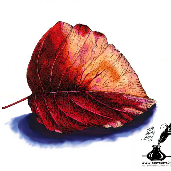 Leaf Watermark.jpg