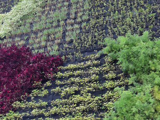 ✅Algumas dicas para um belo jardim vertical!