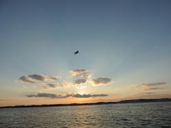Beautiful Dolphin Cruise sunset