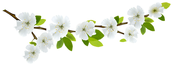 Branch-Flowers-PNG-Pic.png