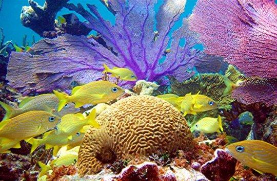 5) Bahamas