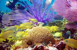 9) Bahamas