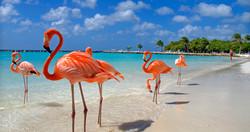 7) Aruba