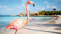 2) Aruba