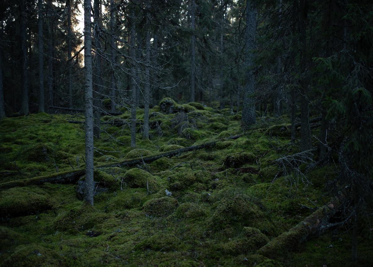 Routa Design Metsä