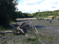 river bed driftwood
