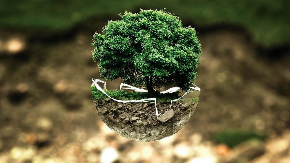Árbol en el planeta