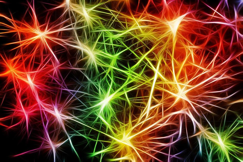 Conexiones del sistema nervioso