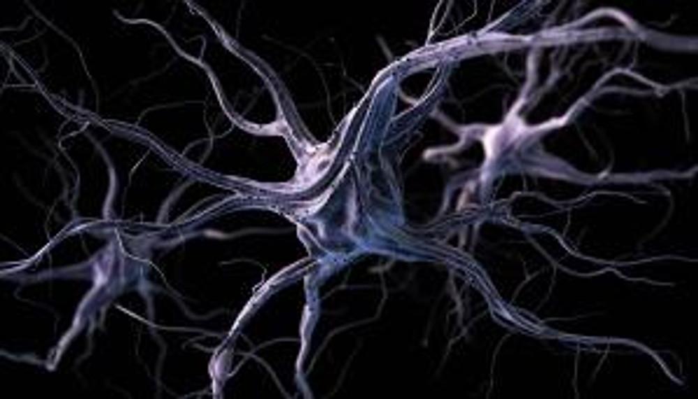 neurons in brain