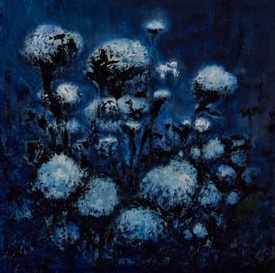 Nature-4_Cotton by night.psd.jpg