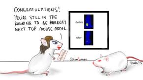 Mouse Models