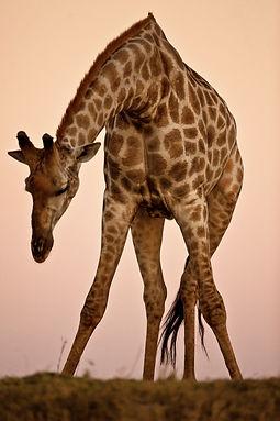 Mammals (3).jpg