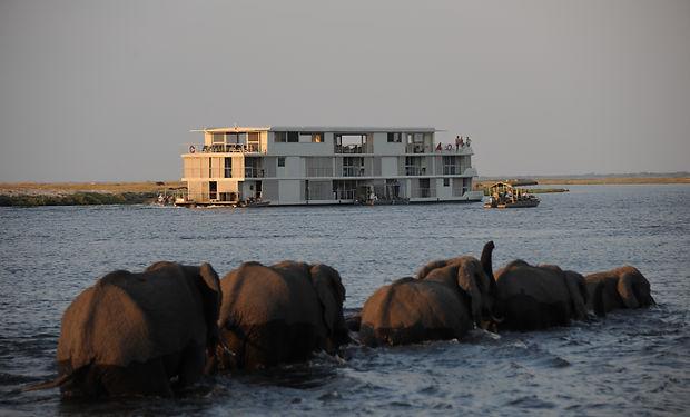 Zambezi Queen_Elephants.jpg