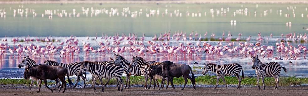Ngorongoro%25252520Flamingos_edited_edit
