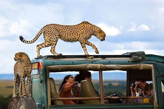 safari_edited.jpg
