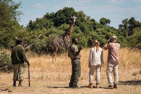 walking-safari-in-south_edited.jpg