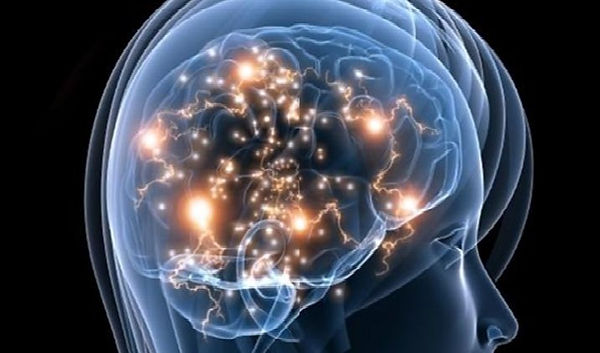 脳の透過イメージ