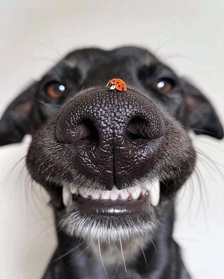 Hund und Käfer