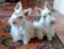 Winston-and-Pippa-1.jpg