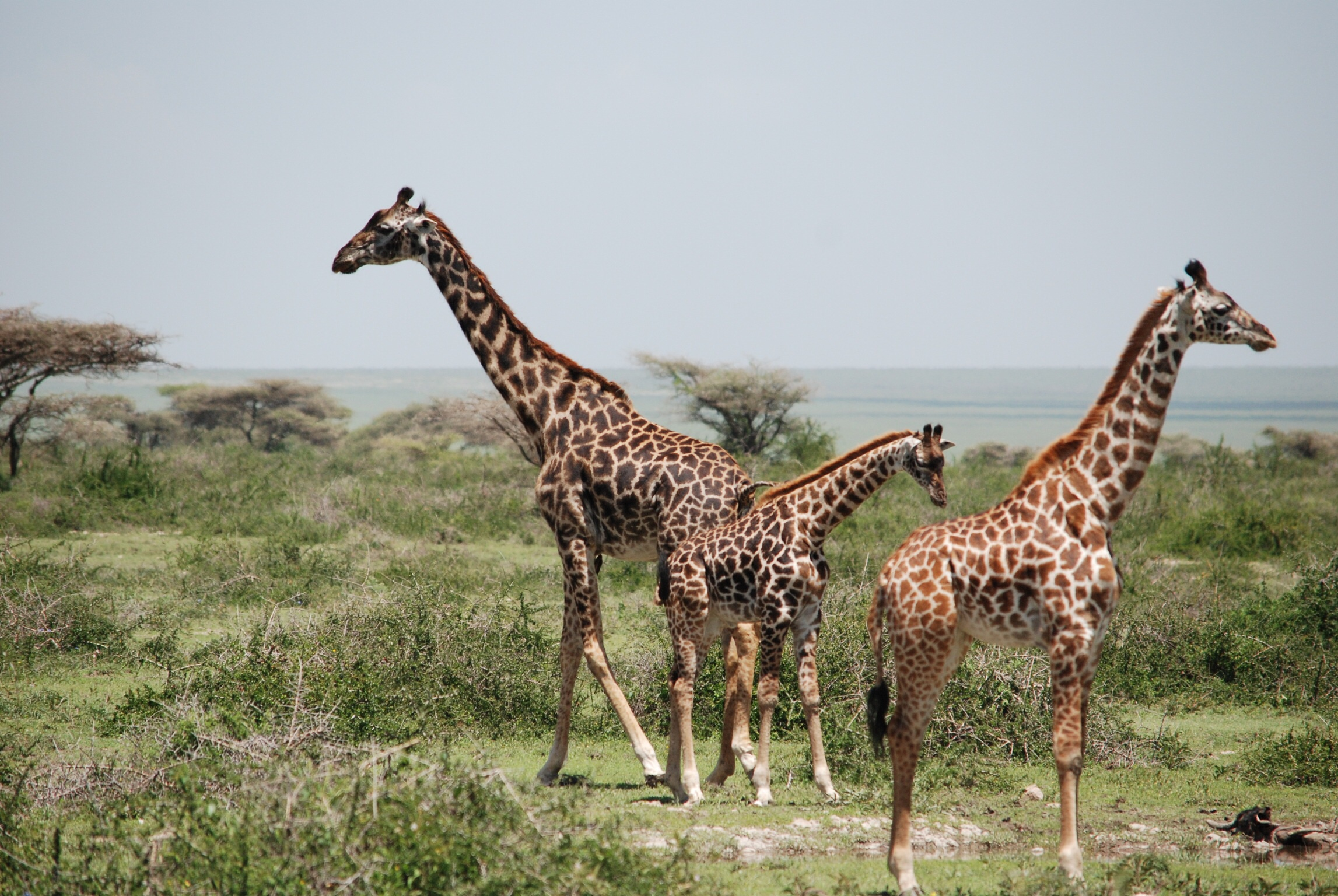 Serengeti National Park - Tanzânia