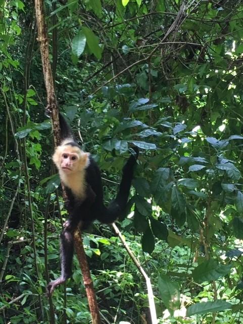 Parque Manuel Antônio - Costa Rica
