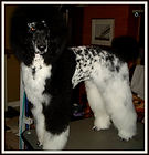DAM: CKC/AKC/UKC ... THE WIND WHISPERS BELLE (aka BELLE)