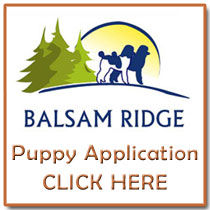 Puppy Application