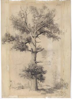 The Oak. Prussia