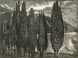 Кипарисы в Гаграх