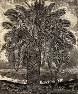 Пальма в Гаграх