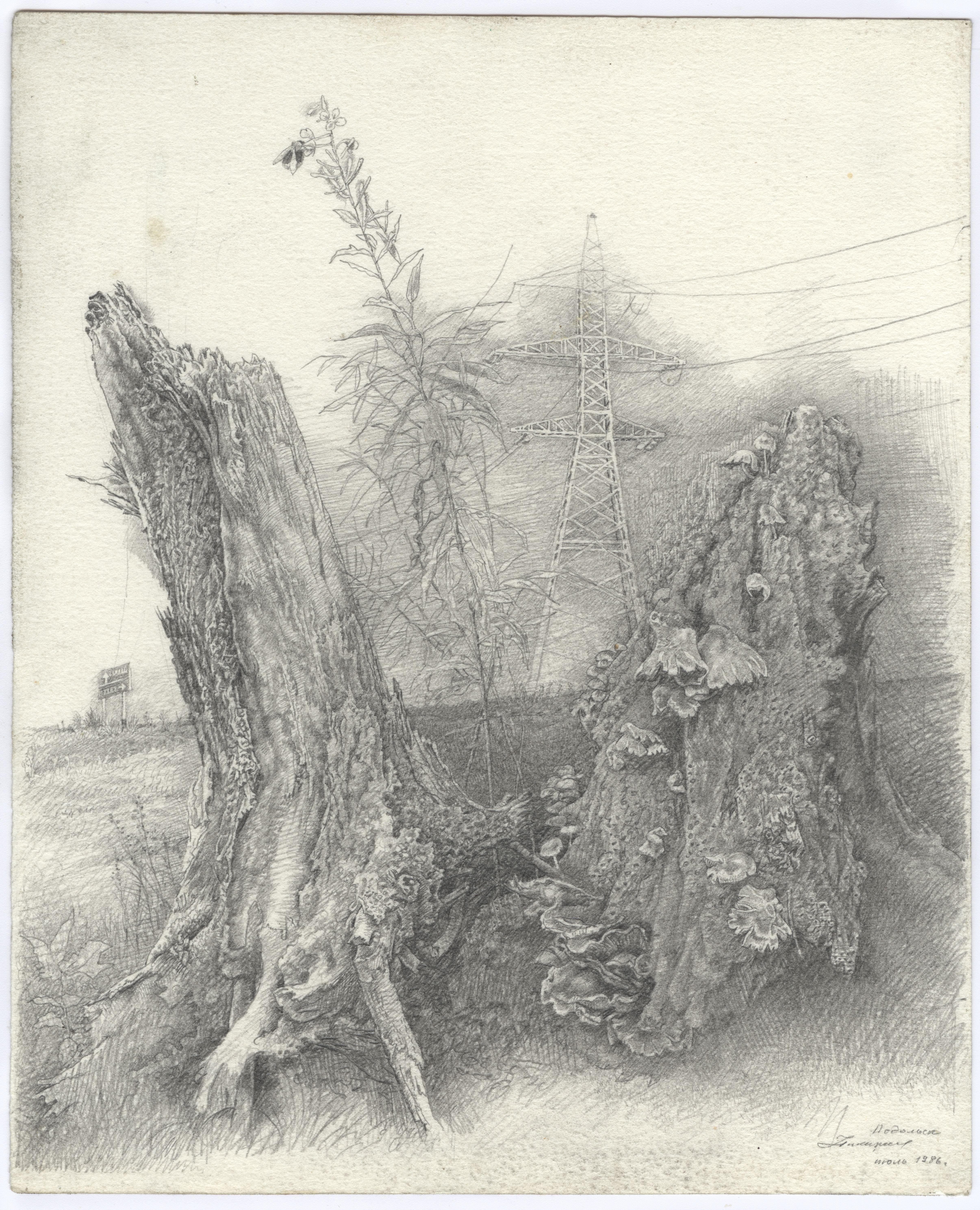 Abandoned Stumps. Podolsk