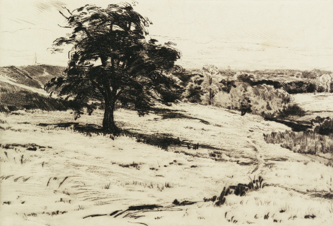View with a Tree
