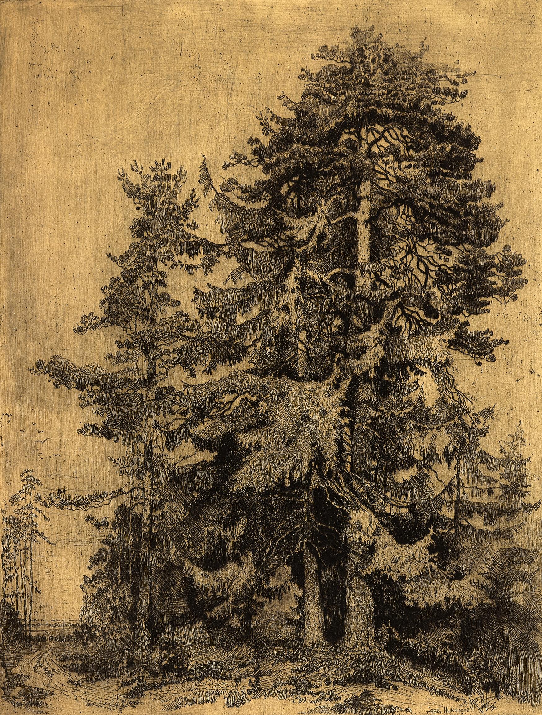 Old Fir Trees