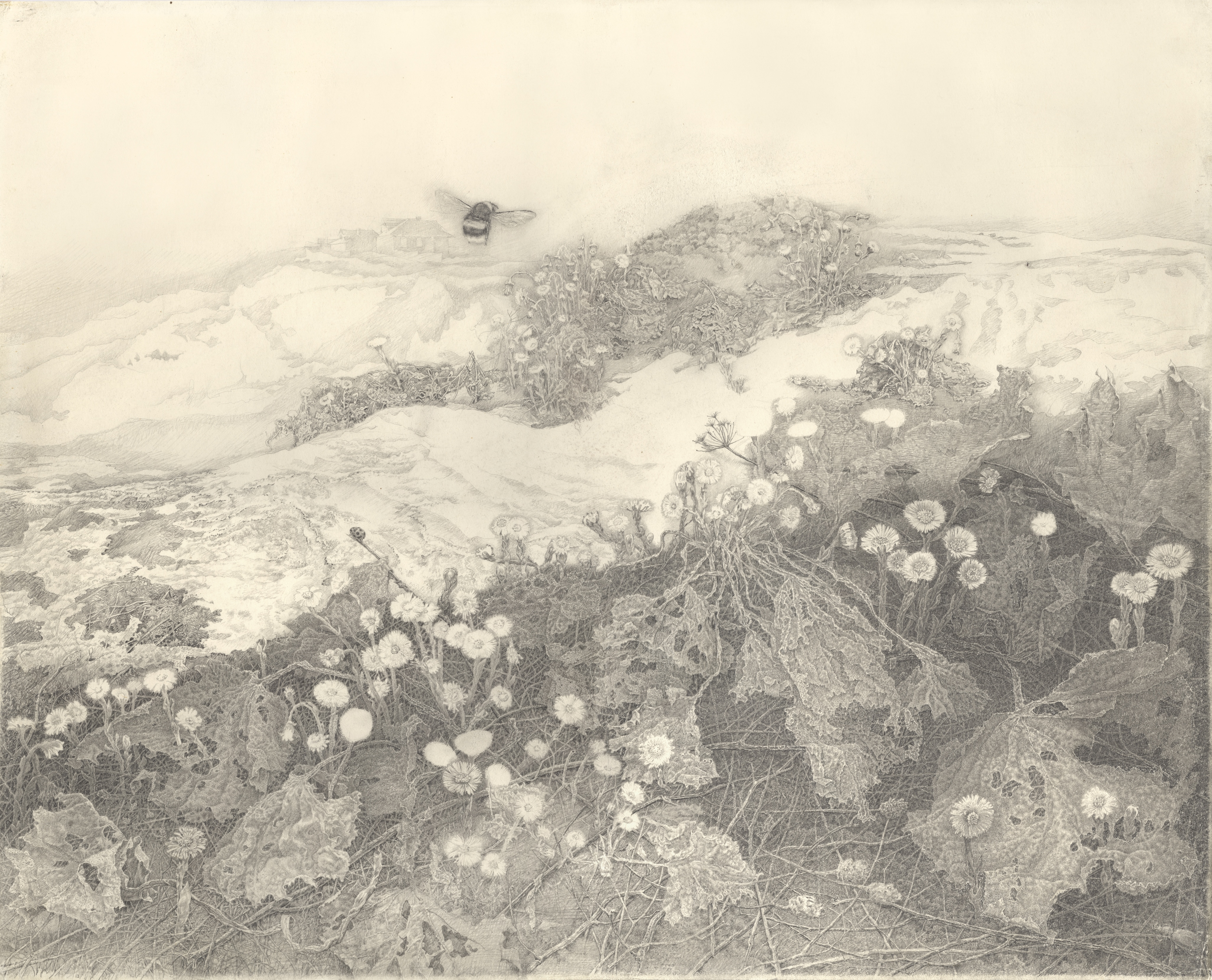 """Sketch of """"Coltsfoot"""""""