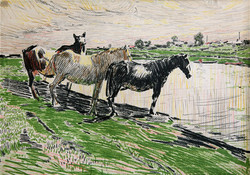 Horses. Kushchevo Village